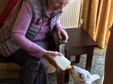 A resident from Sunnymead Residential Home enjoying a fun filled visit from the animals of Kidz Farm.